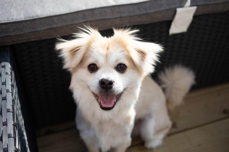 Hundefutter-erlaubt-froher-weißer-Hund