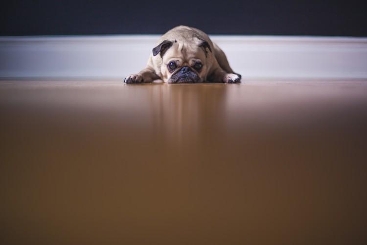 Hundefutter-verboten-Trauriger-Hund-liegt-auf-dem-Boden