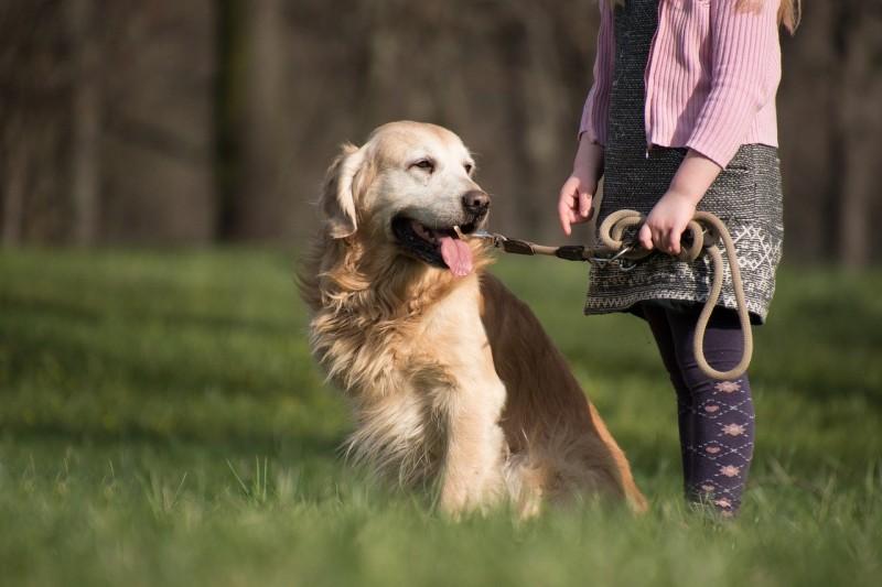 Hund-an-der-Leine-beim-Gassi-gehen