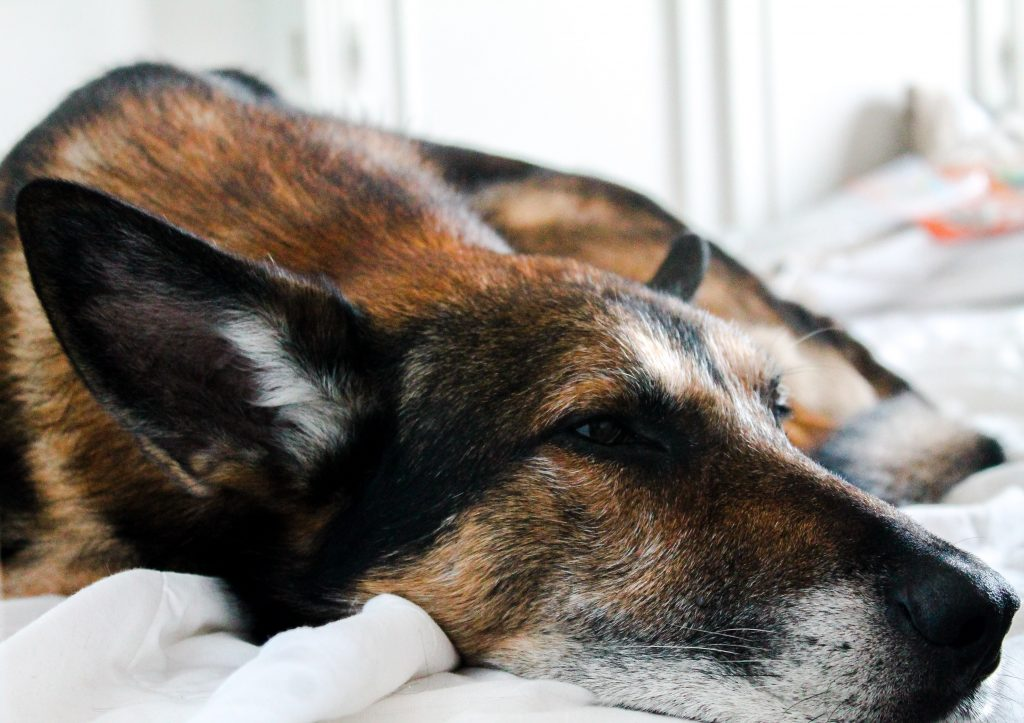 Hundeschlafpatz