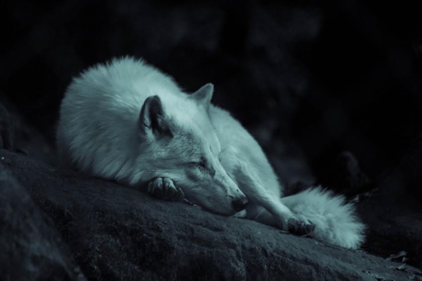 Hund alleine lassen - weißer Hund