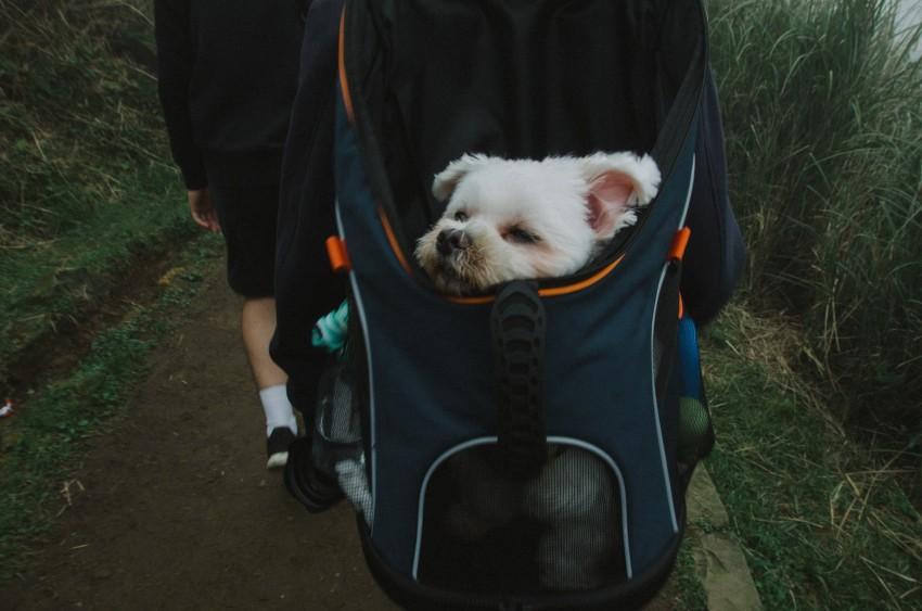 kleiner Hund im Hunderucksack