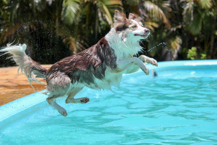 Hundebademantel für Hund, der in den Pool springt