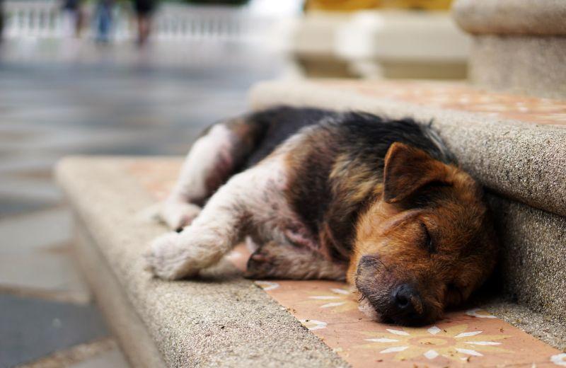 wie lange schlafen Hunde