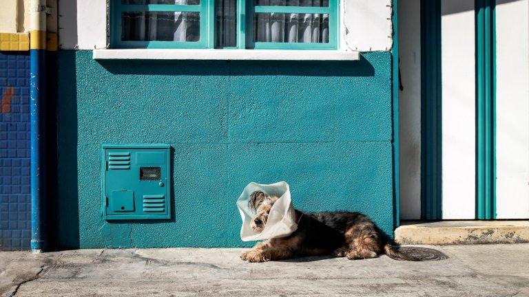 Hund mit Halskrause hat Schmerzmittel erhalten und liegt auf dem Gehweg