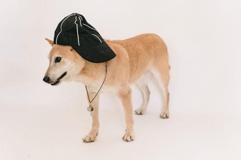 Hundepfeife