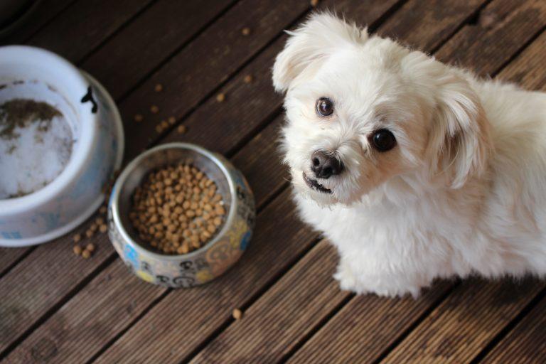 Futterneid beim Hund